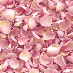 Лепестки роз Art. 05 350