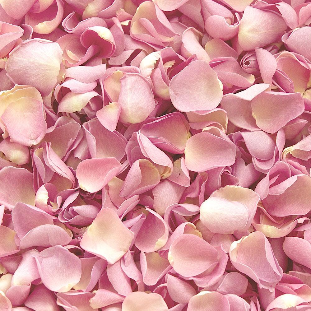 картинки разбросаны розы комната